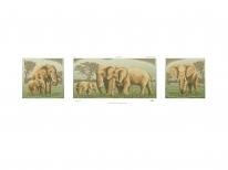 Схема вышивки бисером «Семья слонов» (30x100)